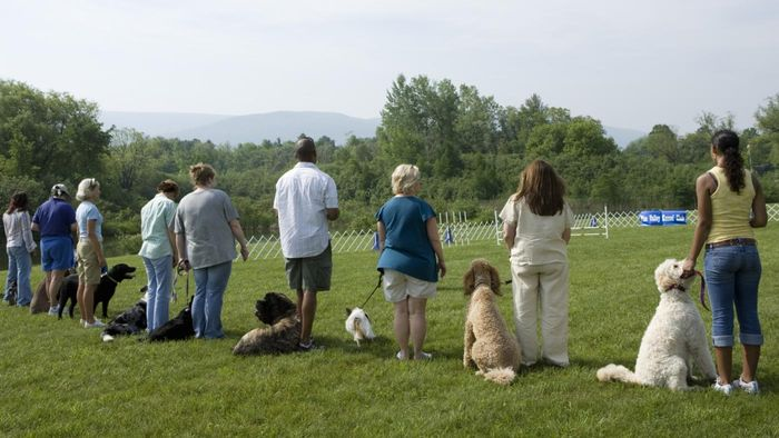 What Is the Koehler Method of Dog Training?