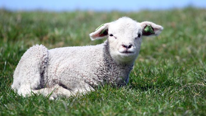 What Does the Lamb Symbolize?