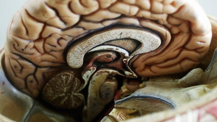 What Is the Largest Part of the Brain?