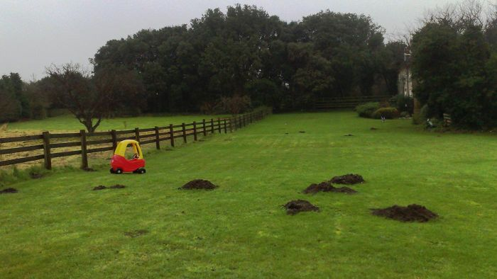 Why Do Lawn Moles Build Mounds?