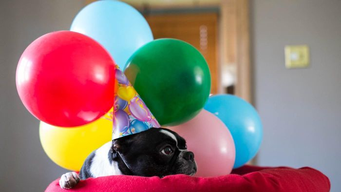 What are the most and least popular birthday months?