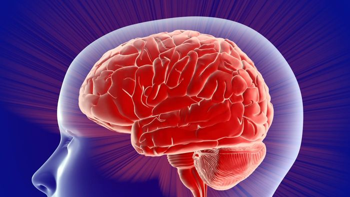 What does the left side of the brain control?