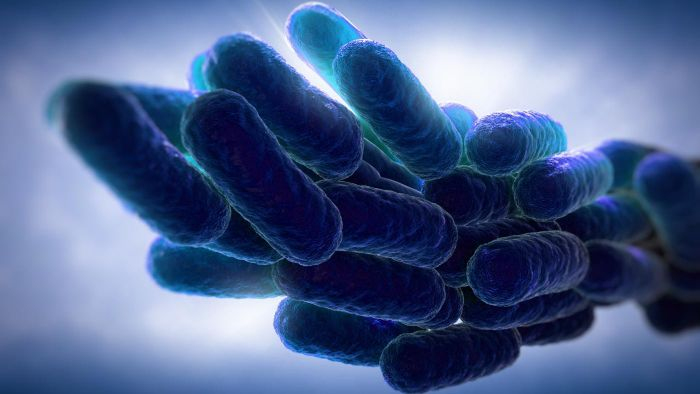 What Is Legionnaires' Disease?