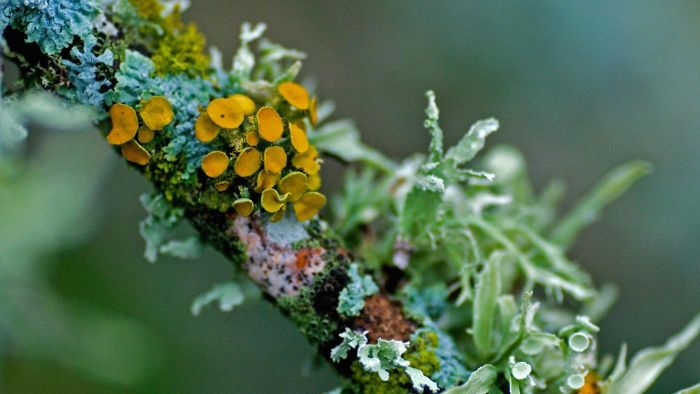 Where Do Lichens Grow?
