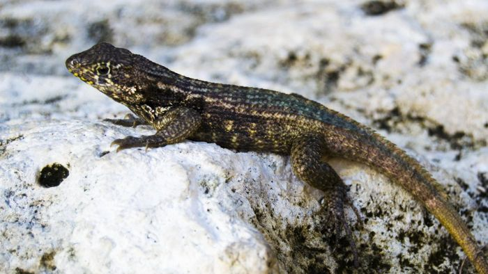 Where Do Lizards Go in the Winter?
