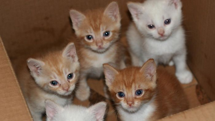 Is there a local site where you can adopt unwanted kittens for free?