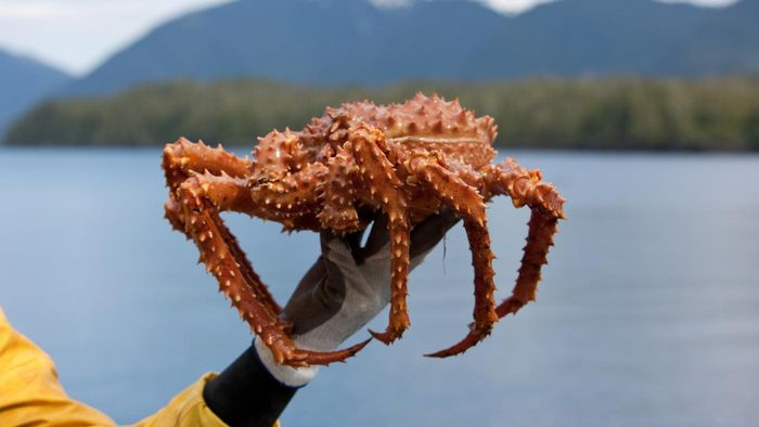 How Long Is the Alaskan King Crab Season?