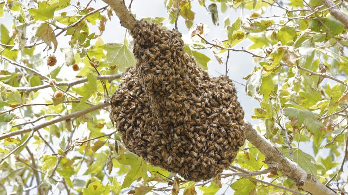 How Long Does It Take Bees to Make a Hive?
