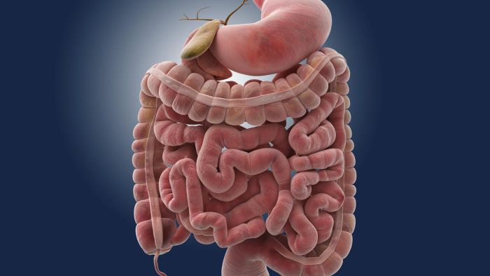 How Long Can It Take Food To Travel Through The Small Intestine
