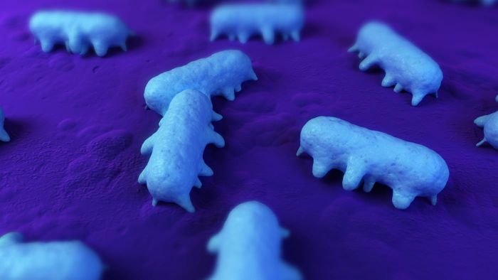 How long can salmonella live on surfaces?