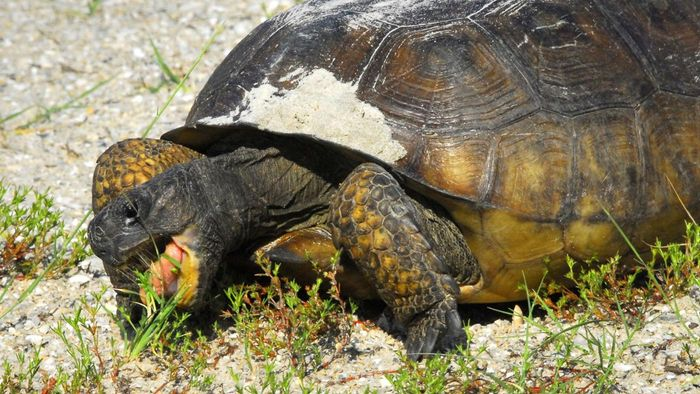 How Long Can a Turtle Live Without Food?