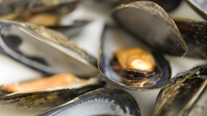 How long will mussels keep in the fridge after being cooked?
