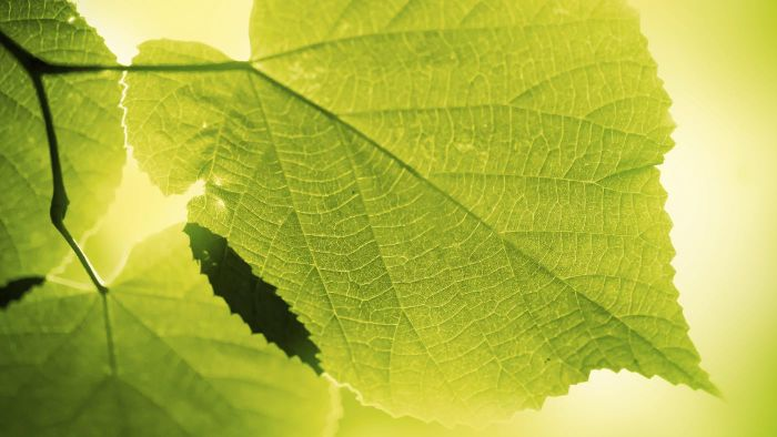 How Long Does Photosynthesis Take?