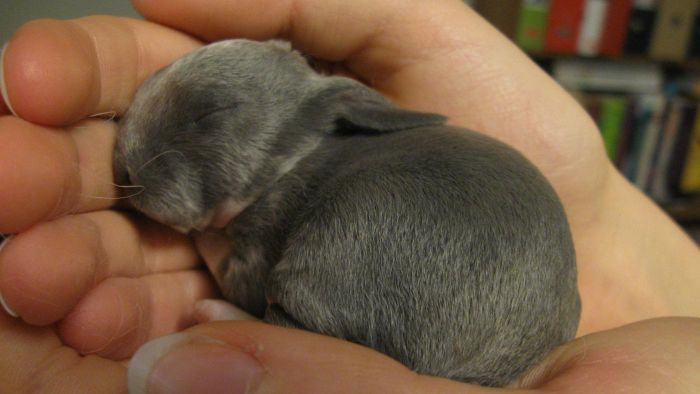How Long Does It Take for Rabbits to Have Babies?