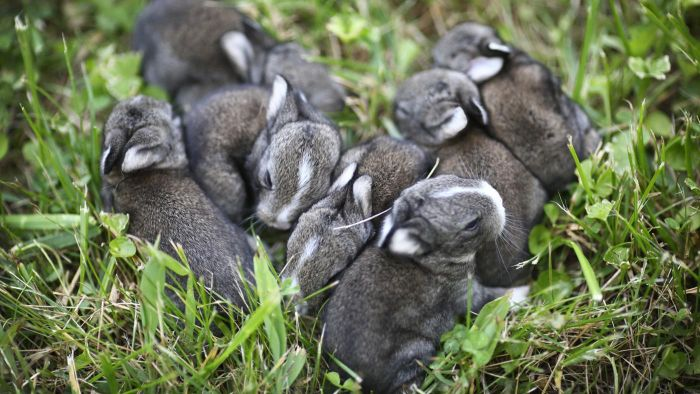 How Long Do Rabbits Stay Pregnant?