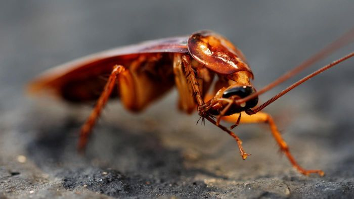 How Long Does It Take to Get Rid of Roaches?