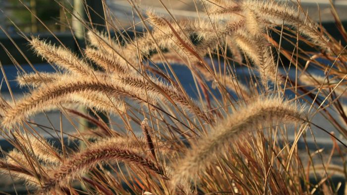 How Long Does Wheat Take to Grow?