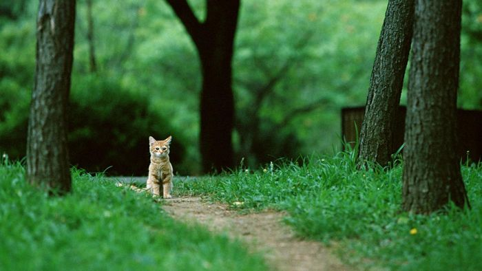 Do Lost Cats Find Their Way Home?