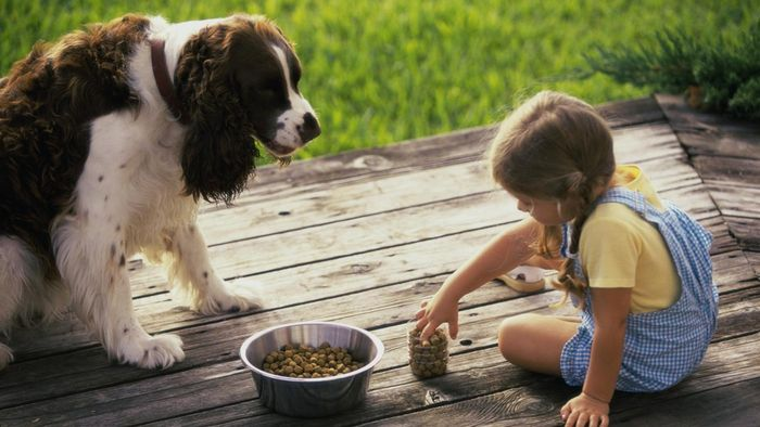What Is the Best Low-Fat Dog Food?