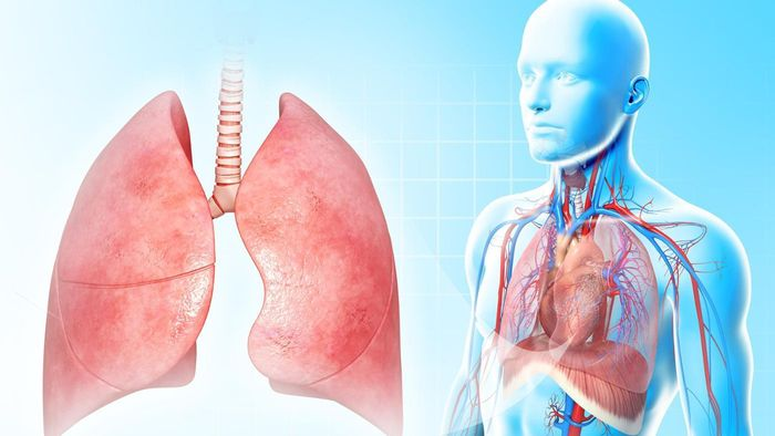 Why Are Lungs so Important?