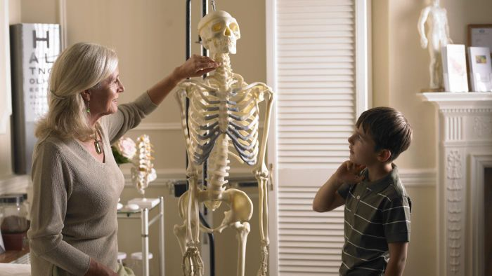 What Are the Main Functions of the Skeletal System?
