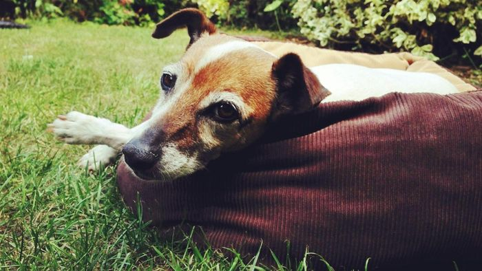 How Do You Make Your Own Outdoor Dog Bed?