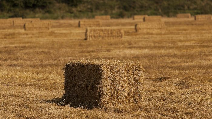 How Many Bales of Hay Are in an Acre?