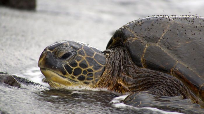 How Many Green Sea Turtles Are Left?