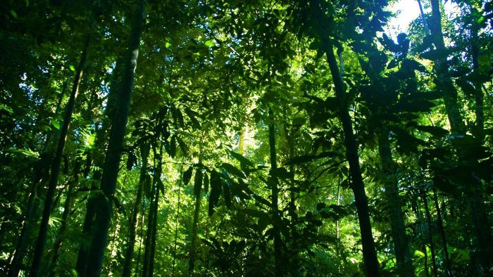 How Many Rain Forests Are Left in the World?