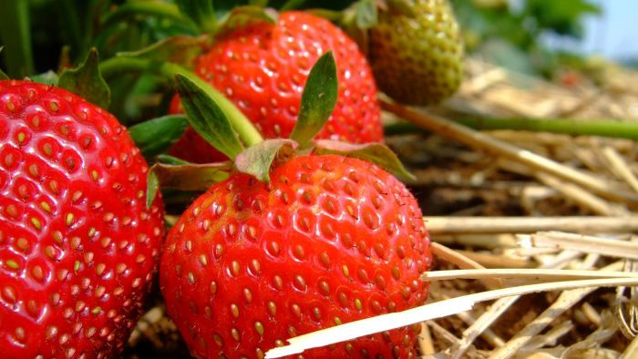 How Many Seeds Does a Strawberry Have?