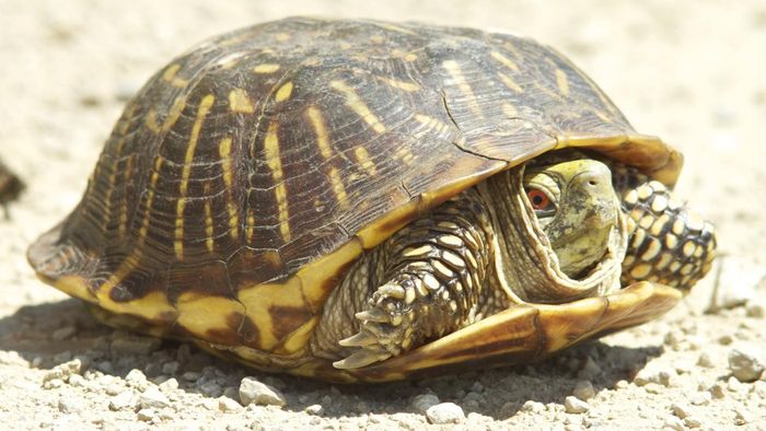 How Many Types of Turtles Are There?