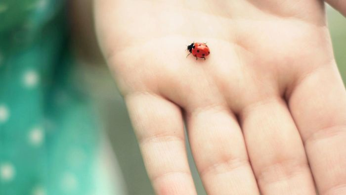 What does it mean when a ladybug lands on you?