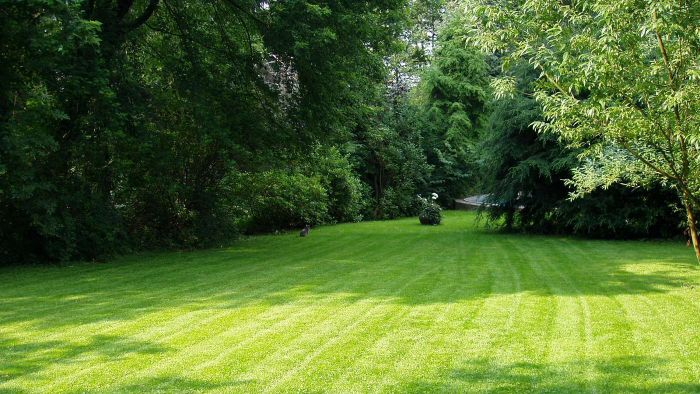 What Are Some Methods for Proper Lawn Care?