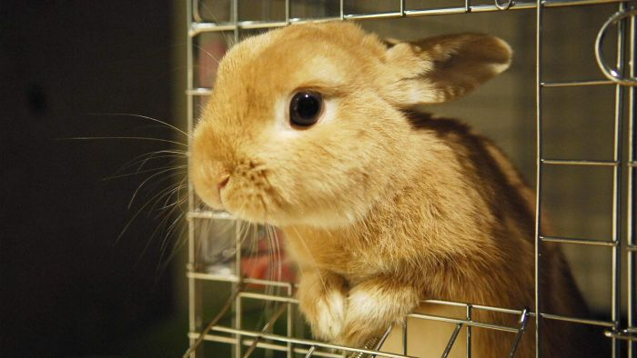 What Are Mini Bunnies?