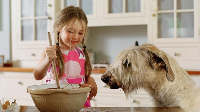 Is There a Miniature Irish Wolfhound?