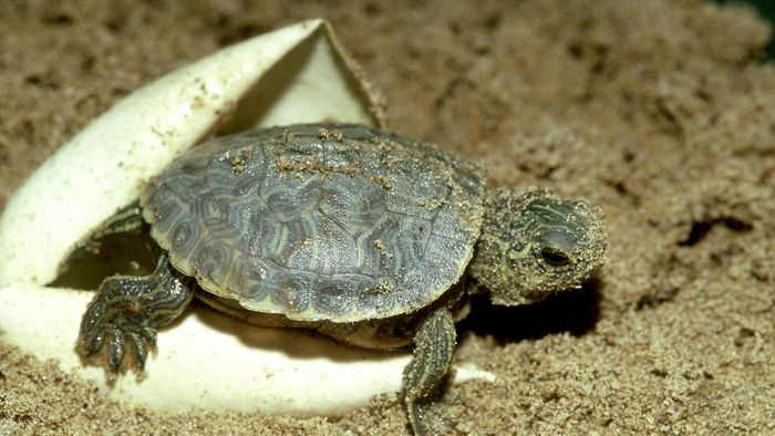 What Are Miniature Turtles?