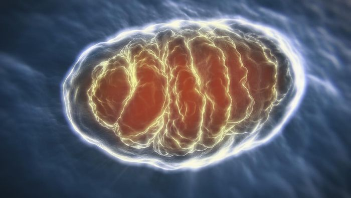 What Is the Mitochondrial Eve?