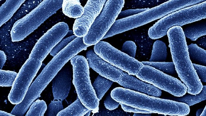 What Is a Mixed Culture in Microbiology?