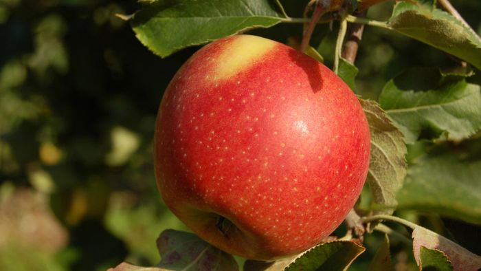 How Much Does an Apple Weigh?