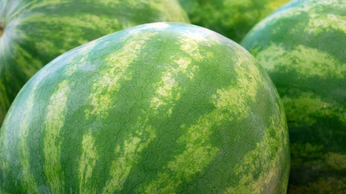How Much Does an Average Watermelon Weigh?