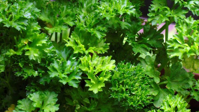 How Much Does a Bunch of Parsley Weigh?