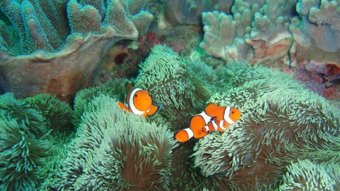 How Much Does a Clownfish Weigh?