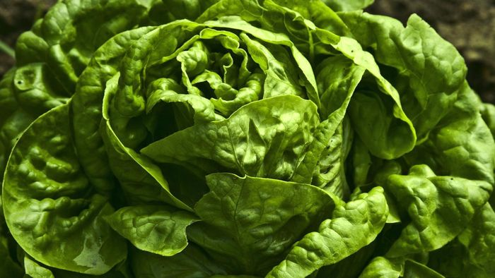 How Much Fiber Does Lettuce Have?