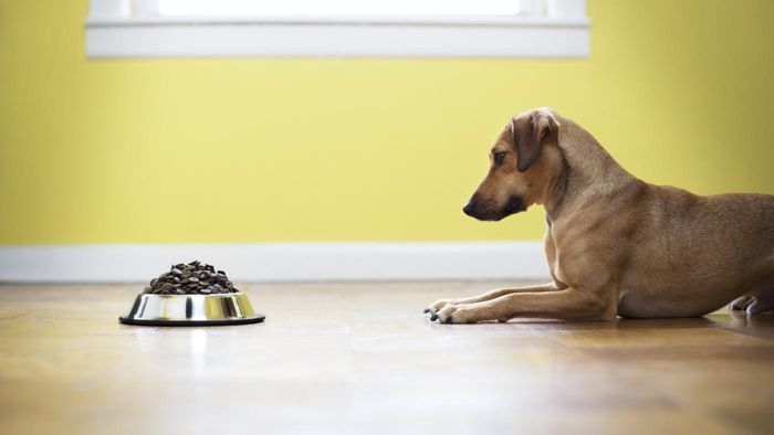 How Much Canned Dog Food Should You Feed