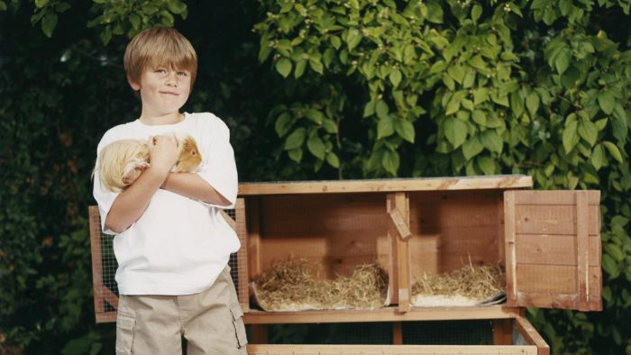 How Much Does a Guinea Pig Poop?