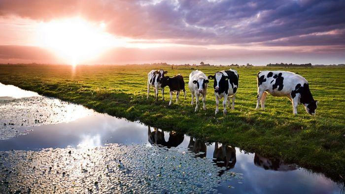 How Much Water Does a Cow Drink in a Day?