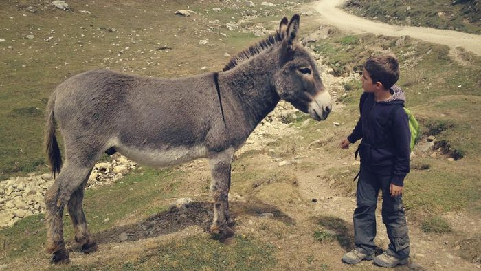 What is the name of a female donkey?