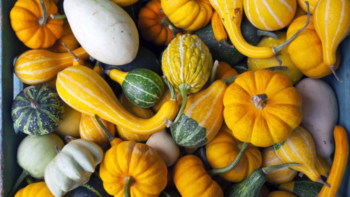 What Are Some Names of Gourds?