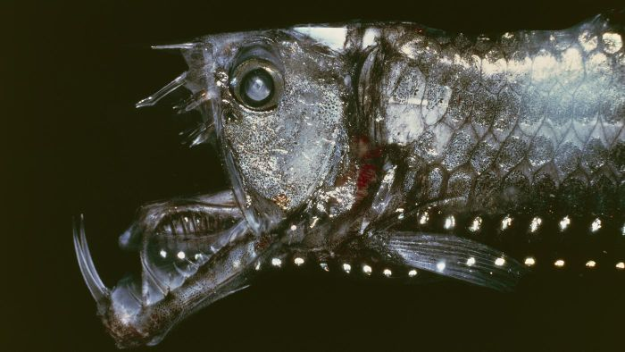 What Are the Names of Some Scary Deep Sea Creatures?