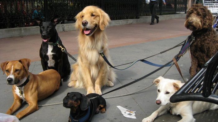 What Is the National Association of Professional Pet Sitters?